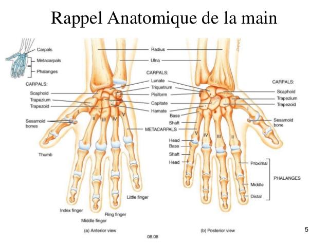 Les nombreuses articulations de la main et l'ostéopathie.